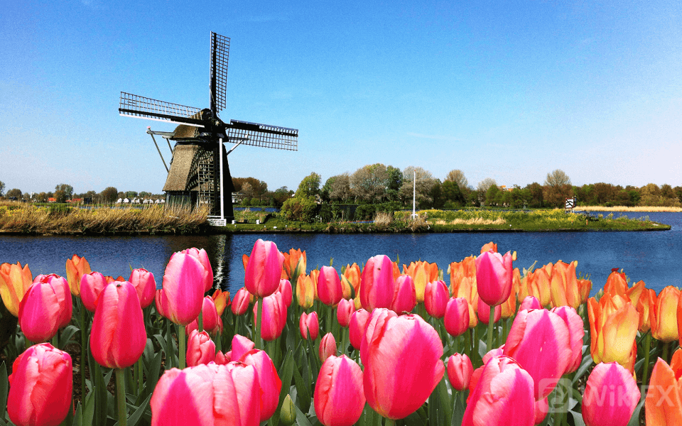 Holland-Windmill-and-Tulips-1600x1000-compressed-960x600.png